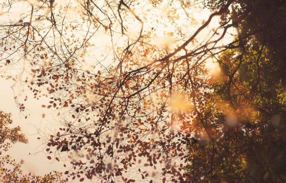 季節の変わり目はうつ病になりやすい?冬季うつ病など、季節性感情障害(SAD)について